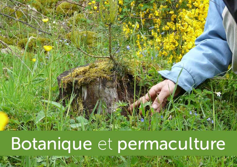 """Formation """"Botanique & Espèces fondamentales pour la permaculture"""" - Eric Escoffier - Château de Celon - Juillet 2020"""